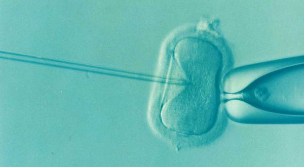 Battle over embryos leads to calls for personhood status